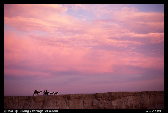 Men riding donkeys leading a camel at sunset, Judean Desert. West Bank, Occupied Territories (Israel)