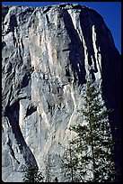 The first part of the route (common with the Triple direct) is reminiscent of the Nose : free climbing and clean aid. The harder aid begins on the traverse just below the Shield, which is the convex part left of the Nose. El Capitan, Yosemite, California (color)