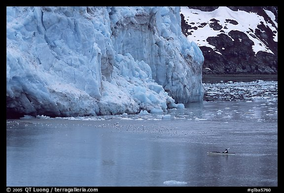 Kayaker dwarfed by the front of Lamplugh Glacier. Glacier Bay National Park, Alaska