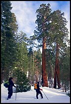 Pictures of Skiing Yosemite