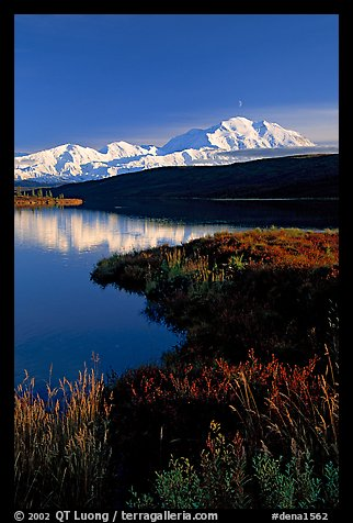 Mt Mc Kinley above Wonder Lake, evening. Denali National Park (color)