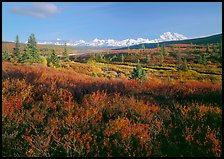 Tundra in autumn colors and snowy mountains of Alaska Range. Denali National Park, Alaska, USA. (color)