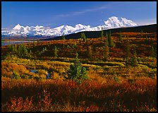 Tundra and Mt McKinley range, late afternoon light. Denali National Park, Alaska, USA. (color)