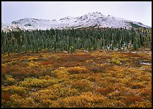 Tundra, spruce trees, and mountains with fresh snow in fall. Denali National Park, Alaska, USA. (color)