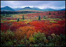 Mosaic of colors on tundra and lower peaks in stormy weather. Denali National Park, Alaska, USA. (color)