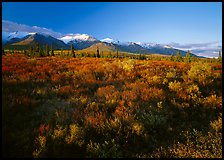 Late afternoon light on tundra and smaller mountain range. Denali National Park, Alaska, USA. (color)