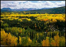 Yellow aspens and Panorama Range, Riley Creek drainage. Denali National Park ( color)