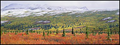 Northern latitudes scenery in autumn. Denali  National Park (Panoramic color)