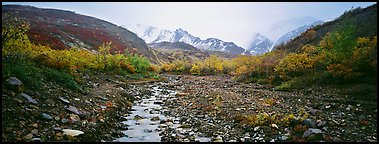 Rocky creek, trees, and snowy mountains in autumn. Denali  National Park (Panoramic color)