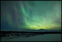 Northern lights  above Alaska range. Denali National Park, Alaska, USA. (color)