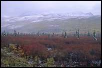 Fog and fresh snow on tundra near Savage River. Denali National Park, Alaska, USA. (color)
