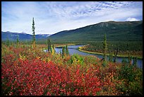Alatna River valley near Circle Lake. Gates of the Arctic National Park ( color)