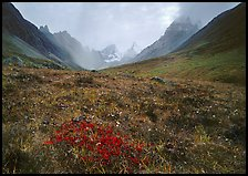 Tundra and Arrigetch Peaks. Gates of the Arctic National Park ( color)