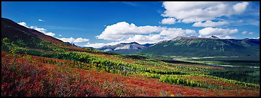 Boreal forest in autumn. Gates of the Arctic National Park (Panoramic color)