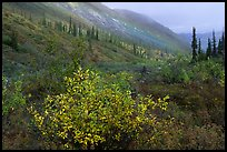 Arrigetch Valley in autumn. Gates of the Arctic National Park, Alaska, USA. (color)