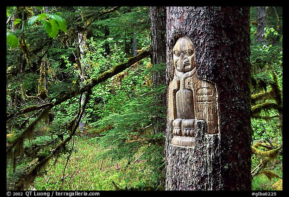 Tree carved by native Tlingit indians, Bartlett Cove. Glacier Bay National Park, Alaska, USA.