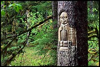 Tree carved by native Tlingit indians, Bartlett Cove. Glacier Bay National Park, Alaska, USA. (color)