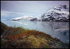 Snowy mountains and icy fjord seen from high point, West Arm. Glacier Bay National Park, Alaska, USA. (color)