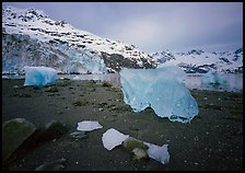 Translucent icebergs at the base of Lamplugh Glacier, morning. Glacier Bay National Park, Alaska, USA. (color)