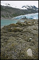 Beach with seaweed exposed at low tide in Reid Inlet. Glacier Bay National Park, Alaska, USA. (color)