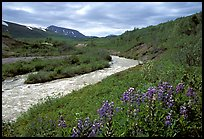 Wildflowers and Lethe river at the edge of the Valley of Ten Thousand smokes. Katmai National Park ( color)