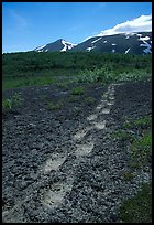 Big bear tracks in the ash, Valley of Ten Thousand smokes. Katmai National Park, Alaska, USA. (color)
