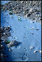 Close-up of animal tracks in fine ash, Valley of Ten Thousand smokes. Katmai National Park, Alaska, USA. (color)
