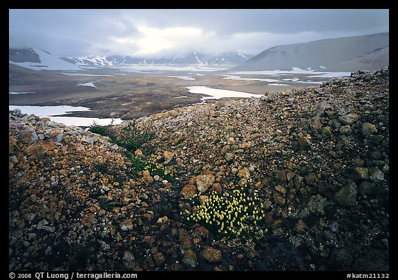 Wildflowers, pumice, and distant peaks in storm, Valley of Ten Thousand smokes. Katmai National Park (color)