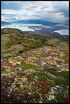 Colorful tundra in the fall above Naknek Lake and Lake Brooks. Katmai National Park ( color)