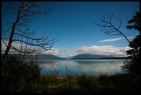 Naknek Lake at night, framed by trees. Katmai National Park ( color)