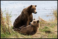 Sow and brown bear cub. Katmai National Park ( color)