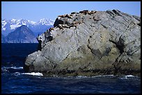 Rock with cormorant and sea lions in Aialik Bay. Kenai Fjords National Park ( color)