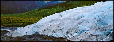 Glacier and trees in autumn color. Kenai Fjords  National Park (Panoramic color)