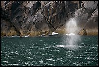 Whale spouting. Kenai Fjords National Park, Alaska, USA. (color)