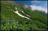 Lupine, neve, and verdant mountain slopes. Kenai Fjords National Park ( color)