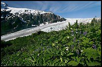 Wildflowers at Marmot Meadows, and Exit Glacier. Kenai Fjords National Park ( color)