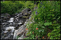 Widflowers and cascading stream. Kenai Fjords National Park ( color)