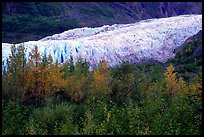 Trees and exit glacier, fall. Kenai Fjords National Park, Alaska, USA.