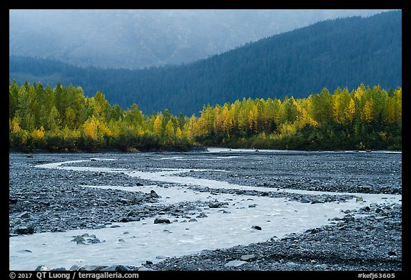Stream and trees in autumn foliage, Exit Glacier outwash plain. Kenai Fjords National Park (color)
