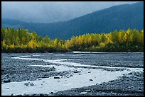 Stream and trees in autumn foliage, Exit Glacier outwash plain. Kenai Fjords National Park ( color)