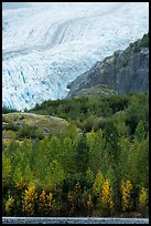 Exit Glacier above trees in autumn foliage. Kenai Fjords National Park ( color)