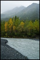 Stream, trees in autum foliage, and misty mountains. Kenai Fjords National Park ( color)