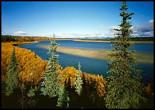 Kobuk river and sand bar seen through Spruce trees. Kobuk Valley National Park, Alaska, USA. (color)