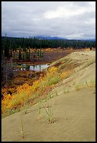 The edge of the Great Sand Dunes with the boreal taiga. Kobuk Valley National Park, Alaska, USA.