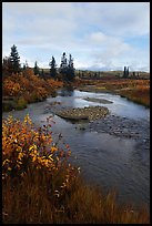 Kavet Creek and spruce trees. Kobuk Valley National Park, Alaska, USA.