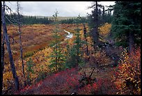 Autumn colors on boreal forest, Kavet Creek. Kobuk Valley National Park, Alaska, USA.