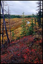 Autumn colors on Kavet Creek near the Great Sand Dunes. Kobuk Valley National Park, Alaska, USA.