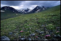 Green valley with alpine wildflowers and snow-clad peaks. Lake Clark National Park ( color)