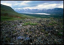 Tundra with forget-me-nots and Twin Lakes. Lake Clark National Park ( color)