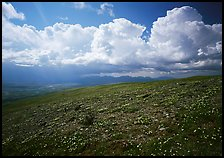 Tundra, wildflowers, and puffy storm clouds. Lake Clark National Park ( color)